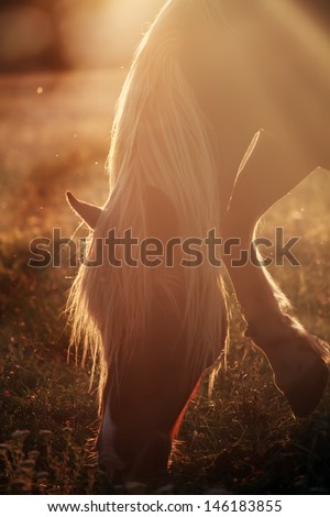 vertical horse portrait in golden soft morning light  - stock photo