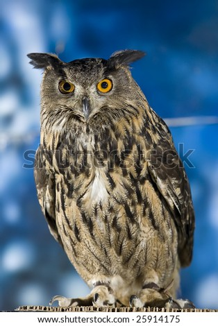 Vertical image of a great horned owl perched. - stock photo