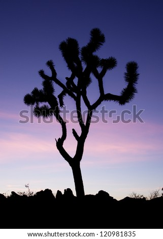 vertical image of a Joshua Tree silhouetted against a blue twilight sky - stock photo