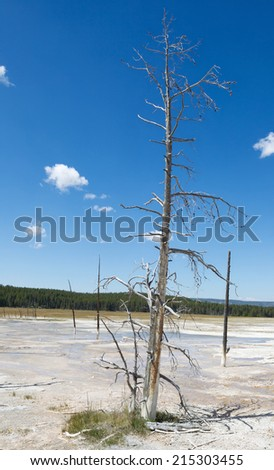 Vertical image of a tall dead tree standing upright in the hot springs of Yellowstone Park with blue sky and clouds in background  - stock photo