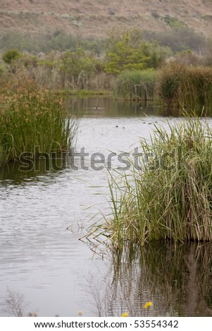 Vertical image of wetlands with reeds on either side of the frame - stock photo