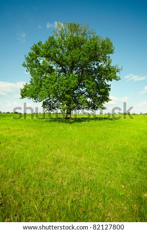 Vertical landscape - a field with a single oak