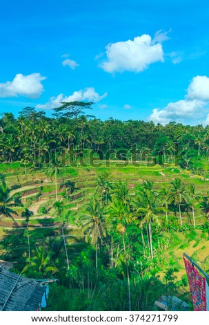 Vertical landscape of famous rice terraces near Ubud in Bali, Indonesia - stock photo