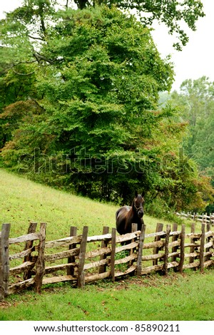 vertical of horse looking over fence - stock photo