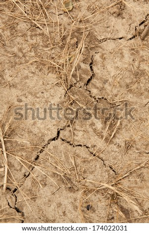 vertical orientation close up of dry, parched earth with dead grass and multiple cracks running through it / The Cost of Drought - stock photo