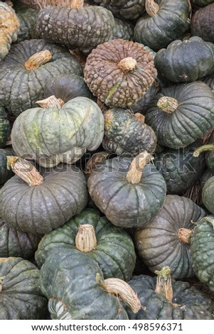vertical orientation color image of hubbard squash just after the harvest / Hubbard Squash in Blues and Grays