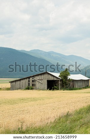 vertical orientation of fields of golden grain and a rustic wooden barn in the foreground, with the Selkirk Mountain Range in the background and copy space / Rustic Barn and Selkirk Mountain Range - stock photo