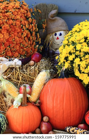 Vertical oriented Picture of Arrangement from Flowers, Bale of Hay, Pumpkin, Squashes, Apples, Maize, Scarecrow in front of Old Barn as decoration for Thanksgiving Day.  - stock photo