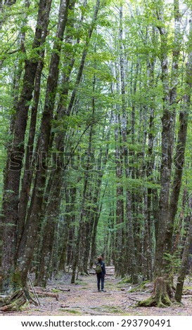 Vertical-Panorama image of young adult wamen on Lake Sylvan Track. This well-defined track leads through old moraine river terraces and tall red beech to Lake Sylvan in Mount Aspiring National Park. - stock photo