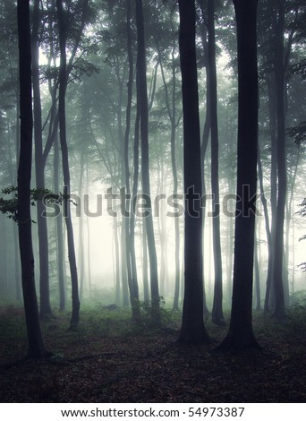 vertical photo of a forest at morning - stock photo