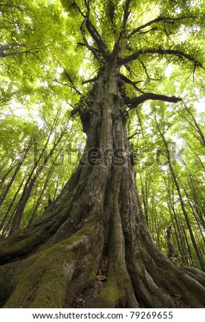 vertical photo of an old tree in a green forest - stock photo