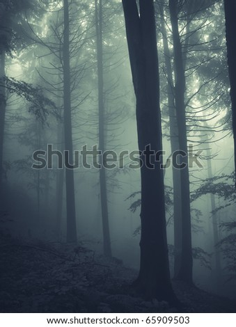 vertical photo of pine trees in a forest with fog - stock photo