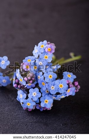 Vertical photo of small flower Myosotis (forget-me-not) with many little blooms and purple buds which is placed on black slate stone which is used as a plate. - stock photo