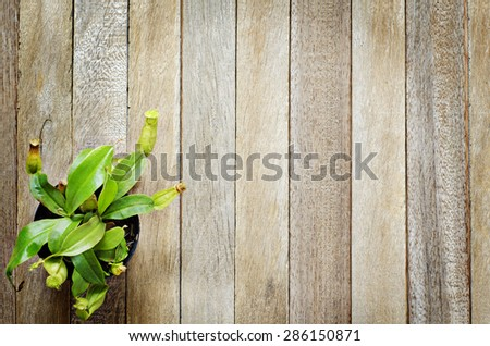 Vertical Plant Garden - Natural Tropical Pitcher Plants or  Monkey Cups on Old Wooden Plank Background Texture - stock photo