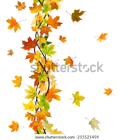 Vertical seamless pattern of branch autumn maple leaves on white background.