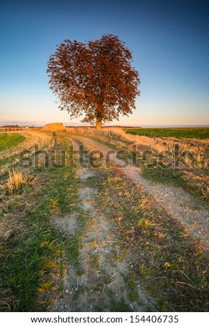 Vertical shot of a big tree with dark brown foliage during an autumn sunset with haystacks, surrounded by fields and clear sky in the back