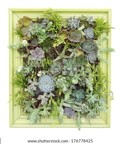 Vertical Succulent Wall Art - stock photo