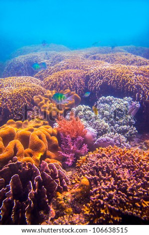 Vertical underwater landscapes of coral reef and ocean life - stock photo