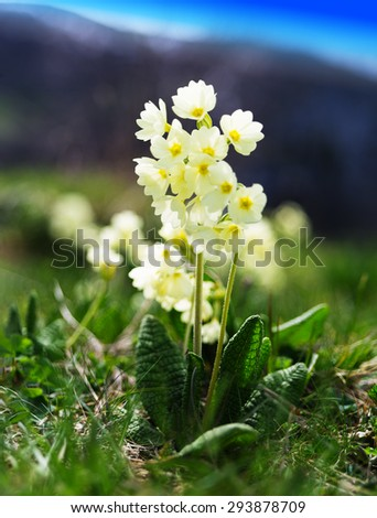 Vertical vibrant mountain flowers bokeh background backdrop - stock photo