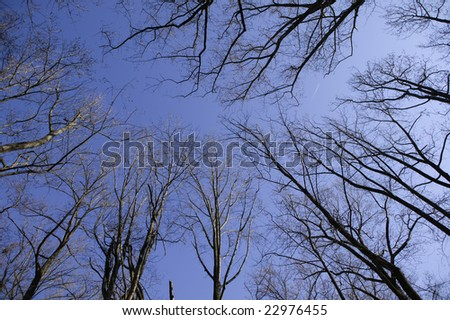 Vertical view of an empty forest