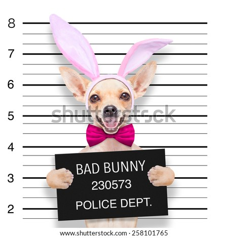very bad chihuahua dog, at the police station ,holding banner or placard as a mugshot - stock photo