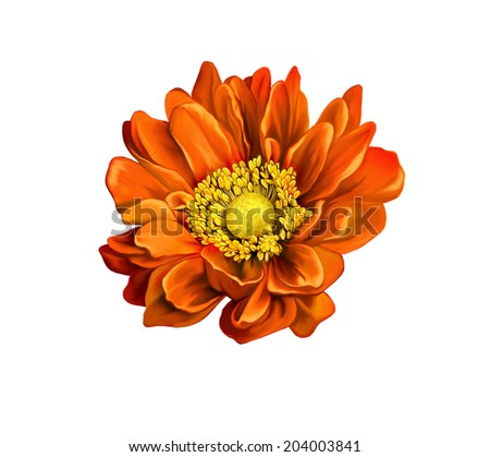 very beautiful bright orange flower - stock photo