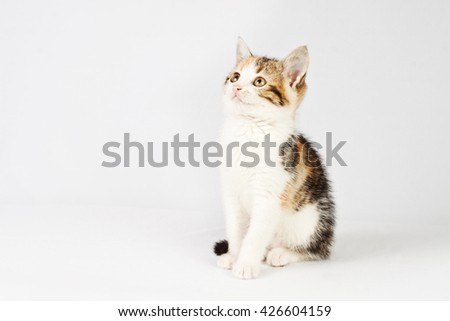very beautiful little tricolor kitten looking up - stock photo