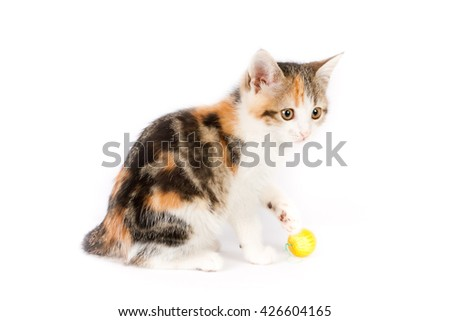 very beautiful little tricolor kitten plays a ball of yarn (ball) - stock photo