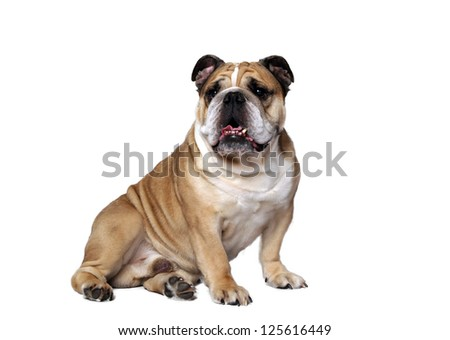 very beautiful, smart and funny dog in studio