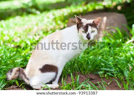 very beautiful young european cat - stock photo