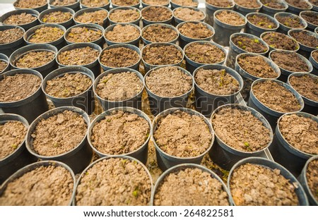 very big set of pots with ground for seedlings agricultural concept  - stock photo