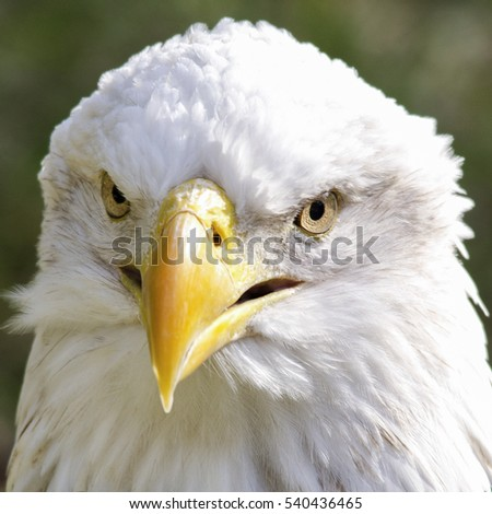 very close up with eagle