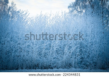 Very cold winter day, frosty trees - stock photo