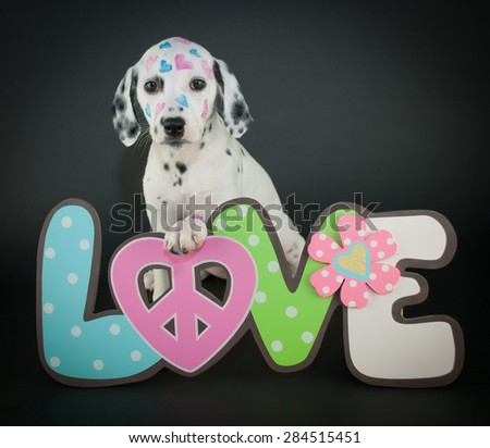 Very cute Dalmatian puppy with a love, peace sign with hearts painted on her face, on a black background. - stock photo