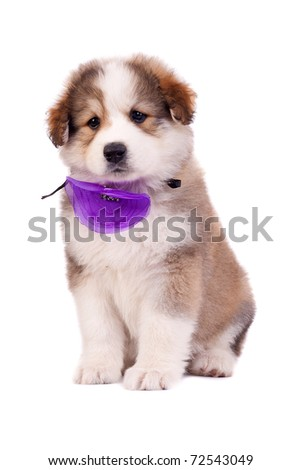 very cute furry bucovinean shepard puppy over white - stock photo