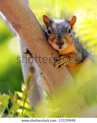 very cute Image of a Common Squirrel - stock photo