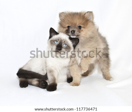 Very cute puppy and kitten friends, on a white background. - stock photo