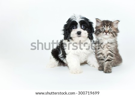 Very cute puppy and kitten sitting together on a white background with copy space. - stock photo