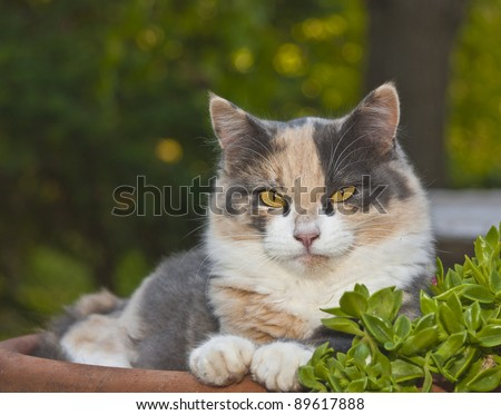 Very cute young, multi-colored, calico cat sitting in a flower pot. - stock photo