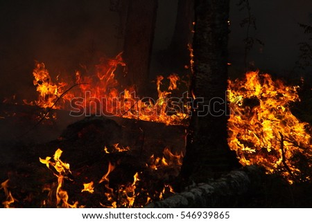 Very dark background image of blazing forest fire in Siberian taiga forest in 2013 with contrasting red and orange flames consuming forest floor and tree roots
