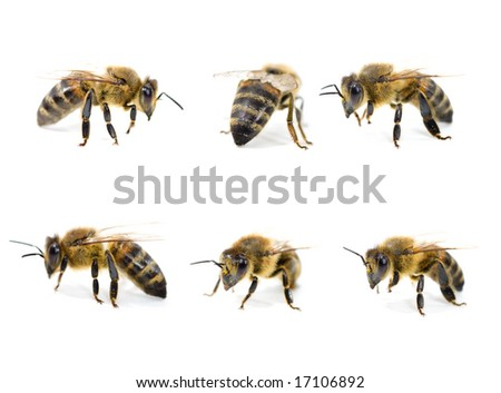 Very detailed Bee collection (XXL).Isolated on white. - stock photo