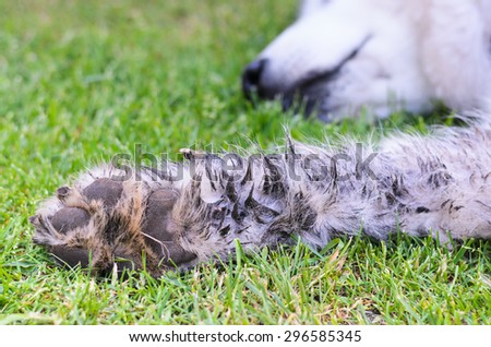 Very dirty dog paw - stock photo