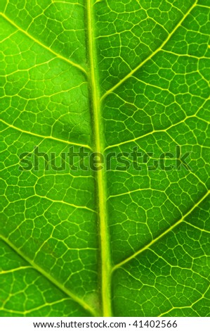 Very extreme close up of green leave - stock photo