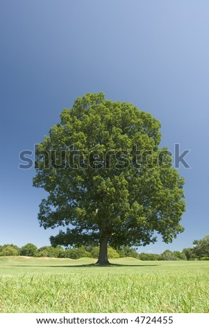 Very Green Tree on the golf course