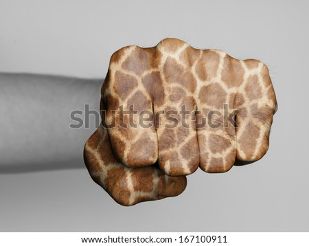 Very hairy knuckles from the fist of a man punching, giraffe print - stock photo