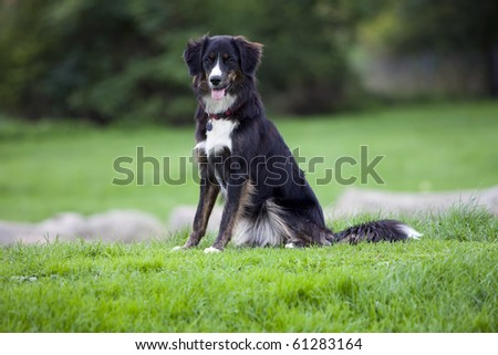 Very happy black dog sitting on green grass - stock photo