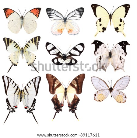 Very Many white butterflies isolated on white background - stock photo
