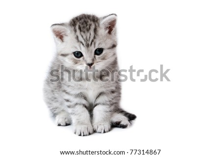 Very nice kitten on white background - stock photo