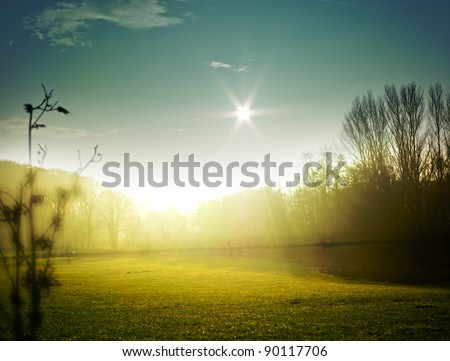 very nice nature background. backlit shot, clear sky {shot on PaseOne P45} - stock photo