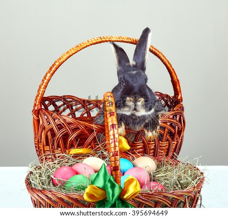 Very nice rabbit sitting in a basket next to Easter basket